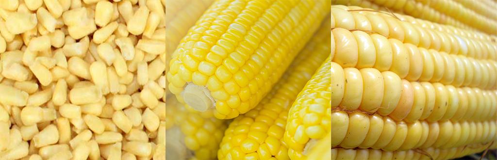 Corn - Organic